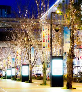 冬,夜,屋外,綺麗,イルミネーション,灯り,街灯,歩道,装飾,明るい,グランフロント,シャンパンゴールド