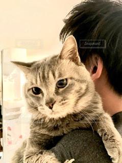 男性,家族,1人,かわいい,人物,可愛い,抱っこ,大好き,オス,キティ,ネコ,ネコ科の動物