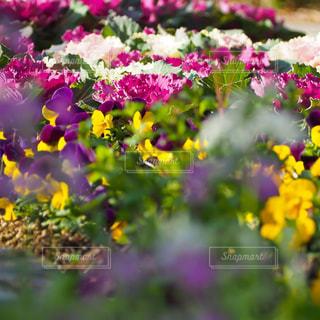花園のクローズアップの写真・画像素材[3029529]