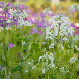 花のクローズアップの写真・画像素材[3029531]