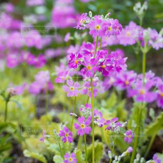 花園のクローズアップの写真・画像素材[3029530]