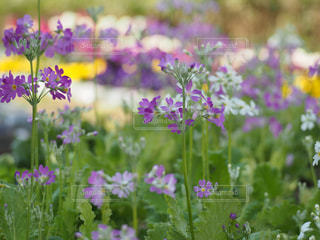花のクローズアップの写真・画像素材[3029534]