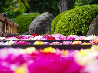 花園のクローズアップの写真・画像素材[3029595]