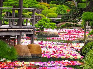 水の庭園の写真・画像素材[3034523]