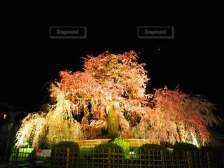 夜桜の写真・画像素材[3051906]