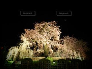 夜桜の写真・画像素材[3051908]