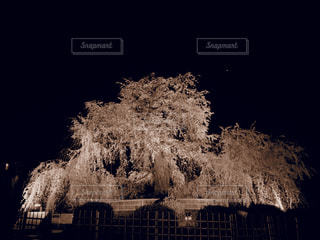 夜桜の写真・画像素材[3051907]