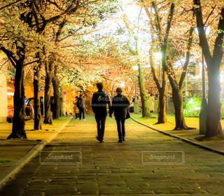 夜桜デートの写真・画像素材[3059594]