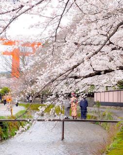 満開の桜の下での写真・画像素材[3061060]