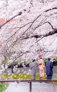 桜の下での写真・画像素材[3061978]