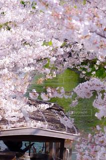 桜のトンネルの写真・画像素材[3069557]