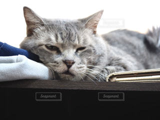 猫のクローズアップの写真・画像素材[3102103]