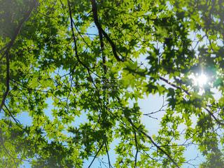 森の中の木の写真・画像素材[3216685]