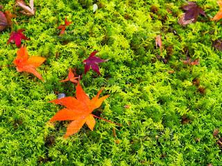 植物の色とりどりの花の写真・画像素材[3216709]