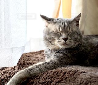 ベッドに横たわる猫の写真・画像素材[3319133]