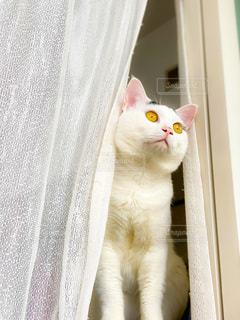 カメラを見ている猫の写真・画像素材[3374199]