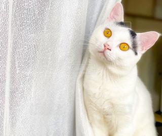 猫のクローズアップの写真・画像素材[3374200]