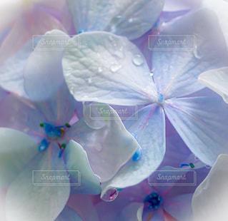 ピンクの花のクローズアップの写真・画像素材[3375728]