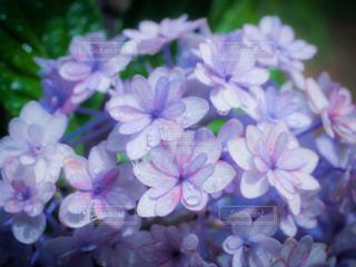 花のクローズアップの写真・画像素材[3375731]
