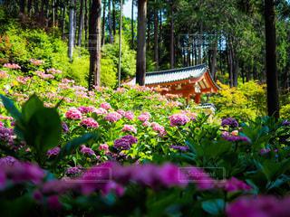 花園のクローズアップの写真・画像素材[3375732]