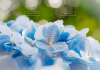 花のクローズアップの写真・画像素材[3375729]