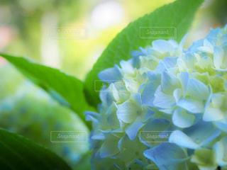 緑の植物のクローズアップの写真・画像素材[3375730]