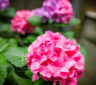 花のクローズアップの写真・画像素材[3380544]