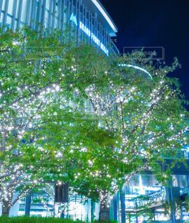 建物,屋外,樹木,イルミネーション,ライトアップ,ビール,イルミ,グランフロント,グランフロント大阪,シャンパンゴールド,グランフロントクリスマス