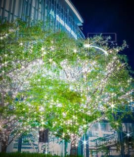 建物,ライトアップ,クリスマス,イルミ,グランフロント,グランフロント大阪,シャンパンゴールド,Grand Wish Christmas 2020