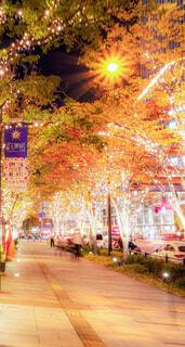 建物,屋外,樹木,イルミネーション,ライトアップ,ビール,歩道,明るい,イルミ,グランフロント,グランフロント大阪,シャンパンゴールド,グランフロントクリスマス