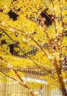 建物,ライトアップ,クリスマス,歩道,イルミ,グランフロント,待ち合わせ,グランフロント大阪,シャンパンゴールド,Grand Wish Christmas 2020