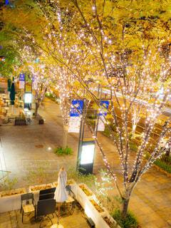 建物,屋内,屋外,樹木,イルミネーション,ライトアップ,クリスマス,明るい,イルミ,グランフロント,グランフロント大阪,シャンパンゴールド,クリスマス ツリー,グランフロントクリスマス,Grand Wish Christmas 2020,Winter Voyage Tree,「Winter Voyage -世界を繋ぐ希望の旅-」