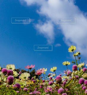 曇りの日に紫色の花で満たされた花瓶の写真・画像素材[4101065]