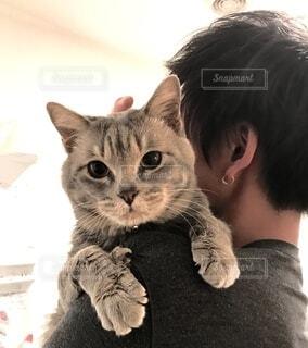猫を抱いている人の写真・画像素材[4163699]