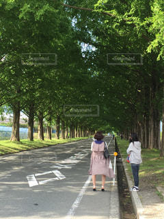 木,トンネル,並樹道