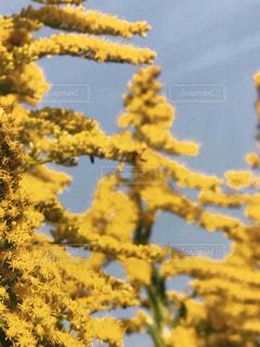 空,花,屋外,植物,黄色,イエロー,ピンぼけ