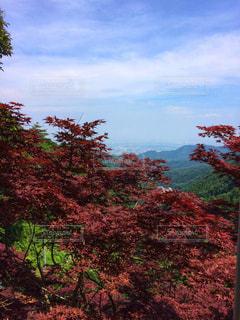 大山の大自然の写真・画像素材[2220373]