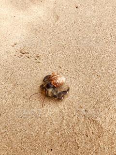 サピ島のかわいいヤドカリの写真・画像素材[2474792]