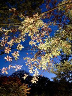 秋夜のライトアップの写真・画像素材[2511343]