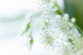 近くの花のアップの写真・画像素材[1386915]