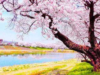 春の写真・画像素材[402361]