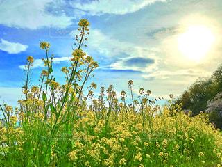 花の写真・画像素材[472847]