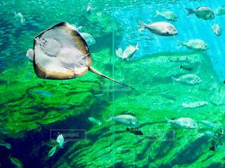 水面下を泳ぐ魚たちの写真・画像素材[761956]
