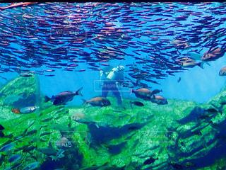 プールの水でカモメの群れの写真・画像素材[761961]