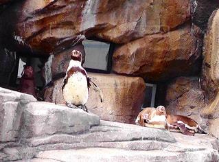 岩の上に座っている鳥の写真・画像素材[764692]
