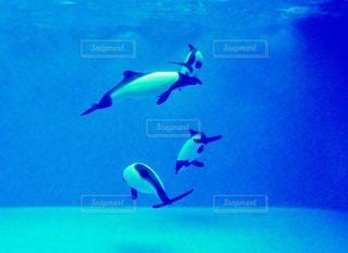 水の上を飛んでいる鳥の写真・画像素材[764720]