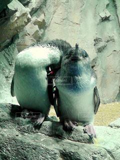 岩に立っているペンギン - No.764730