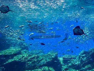 水の中の魚の群れの写真・画像素材[769322]