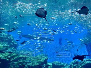 水面下を泳ぐ魚たち - No.769326