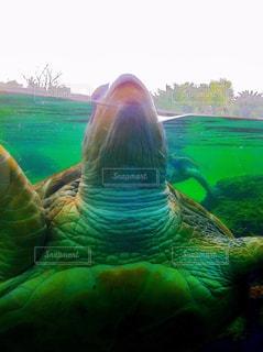 水の下で泳ぐ海亀 - No.773153